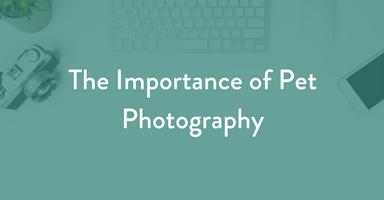 pet photography, dog photography, kim hartz
