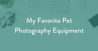 photography equipment, pet photography equipment