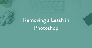 pet photography tutorial, photoshop tutorial, leash removal, pet photography, dog photography, learn pet photography